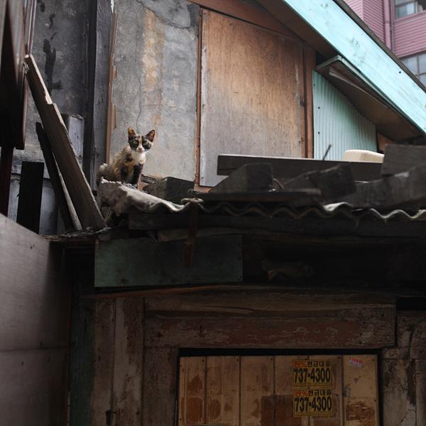 고양이는고양이다 #243