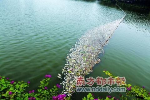 중국에서도 물고기 의문의 떼죽음, 지구 종말설 다..