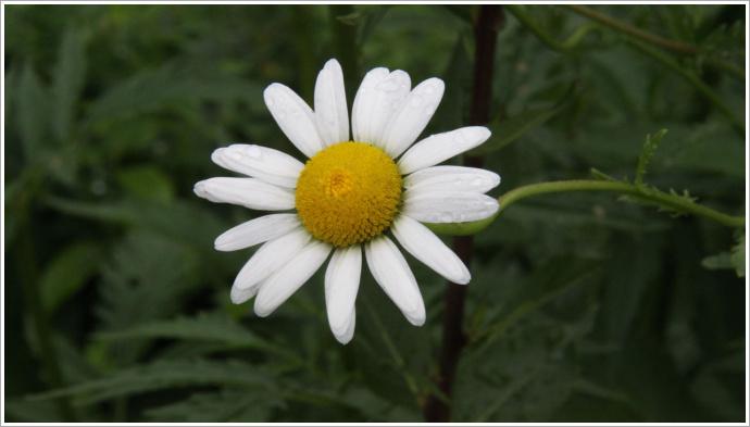 여름꽃과 그리고