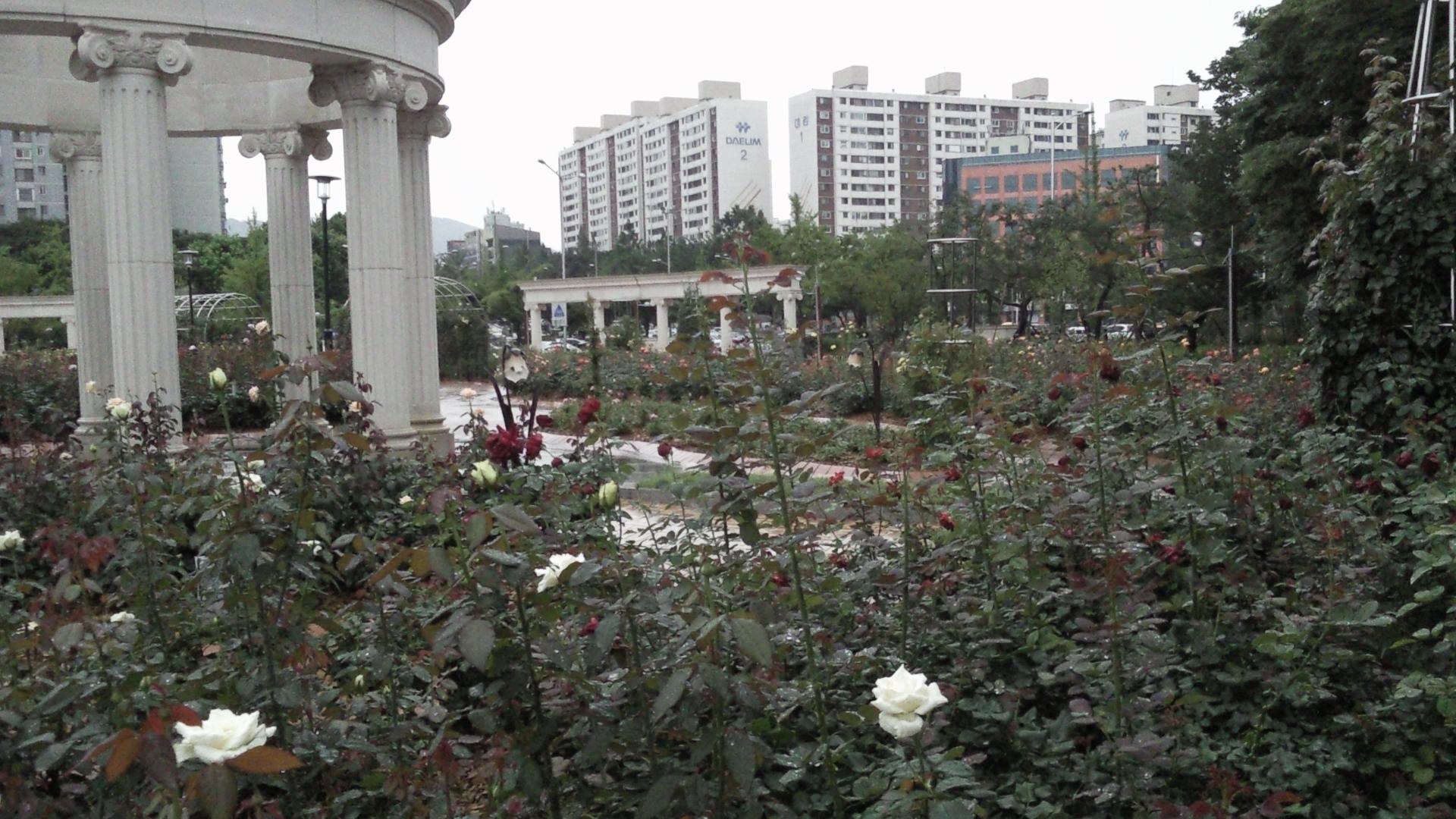 올림픽공원 장미정원