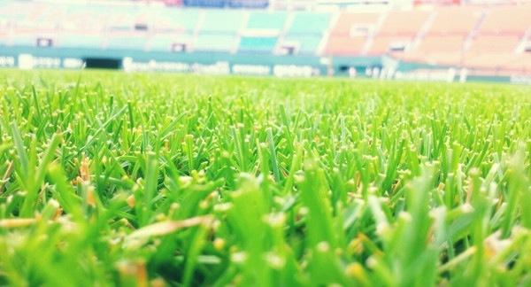 어제의 사직구장 잔디.