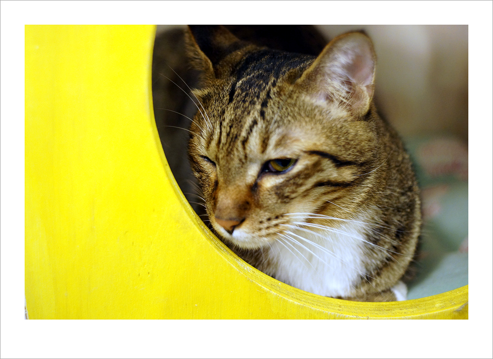 2011.11.20 강남 고양이 카페