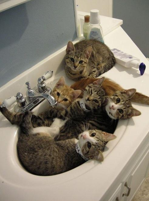 [귀여운사진] 쉿~지금은 고양이들이 목욕 중