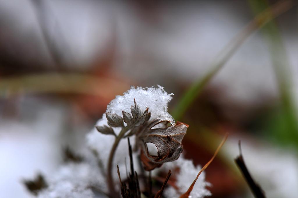 눈이 내린날...