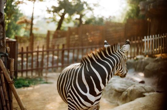 2011 가을, 동물원