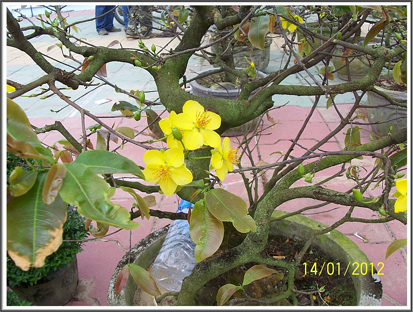 1/14일 베트남 판랑에서 카이트보딩 코스레이싱 대회