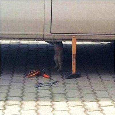 """고객님 차를 너무 막 모셨네 """"지능형 고양이…자동차.."""
