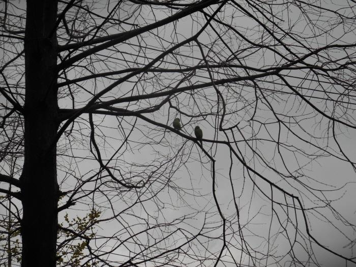 특종! 세상에 이런 앵무새가 자연 나무에 구멍을 뚫..