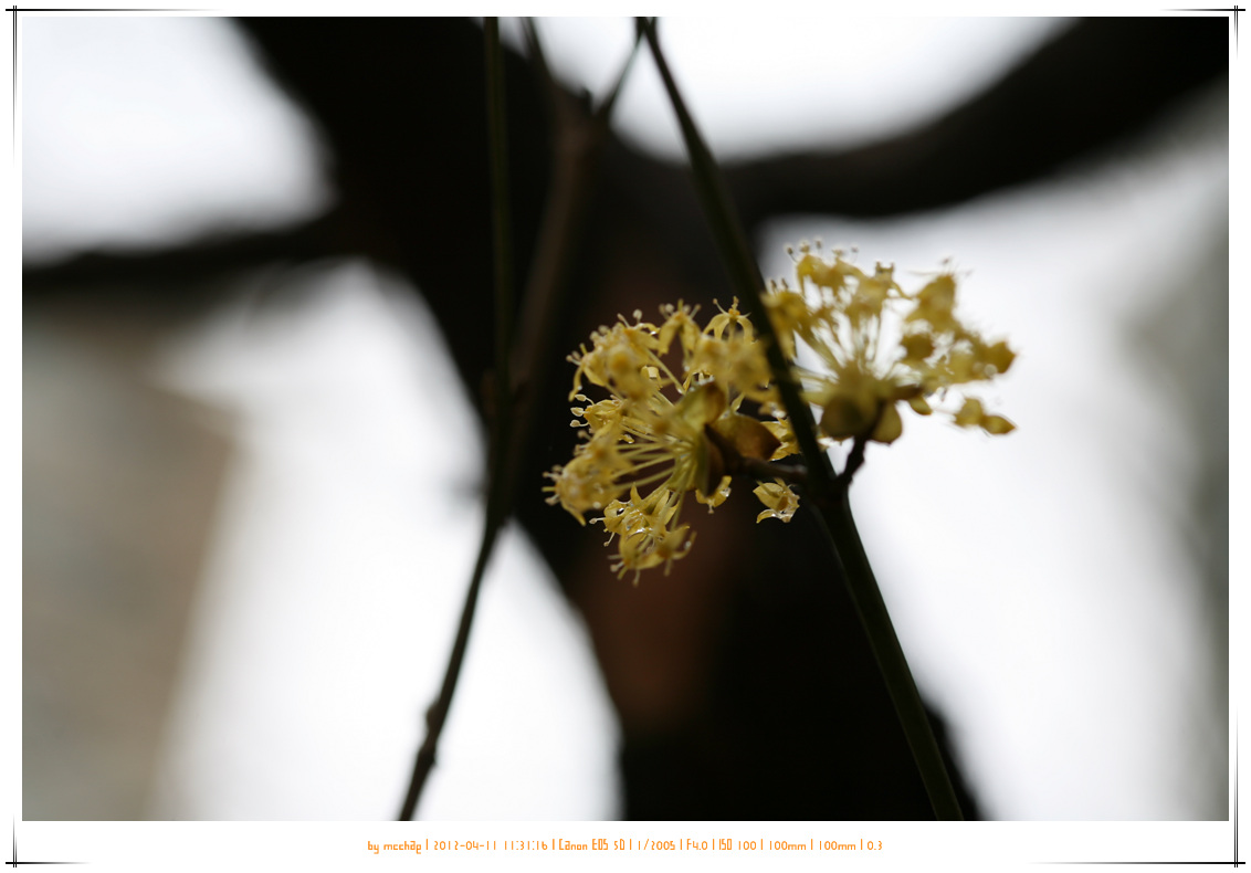 [2012/04/11] 총선날 투표하고 이천 백사면 산수유 마..