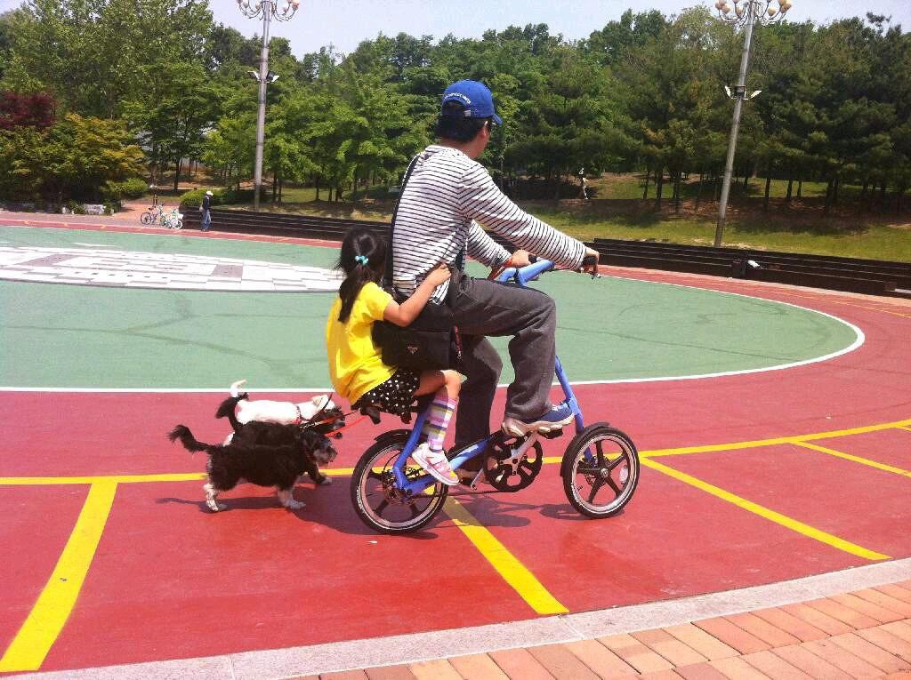 강아지들과 자전거타는 모습