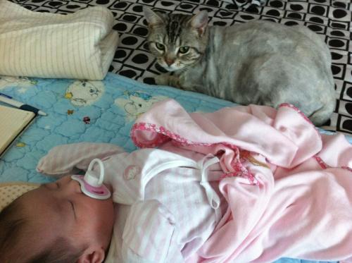 아기와 고양이 - 아기 침대 방어 작전