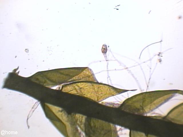 수미생물..