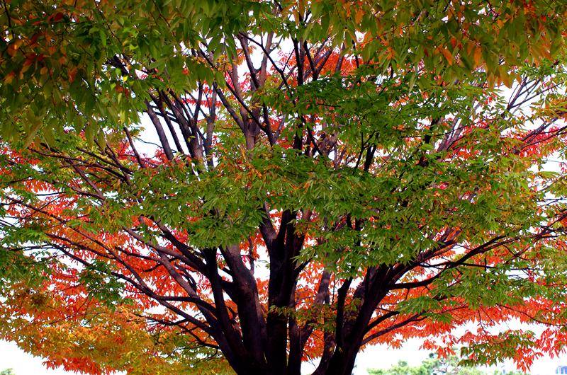 가을이 있는 풍경