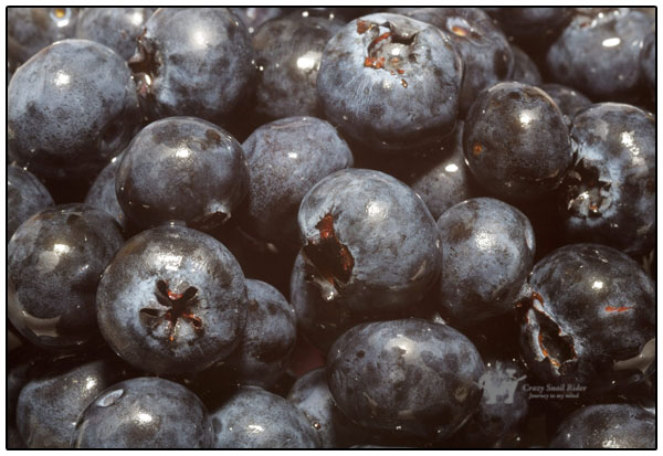 좋은 과일 블루베리 Blueberry and Blueberry hi..