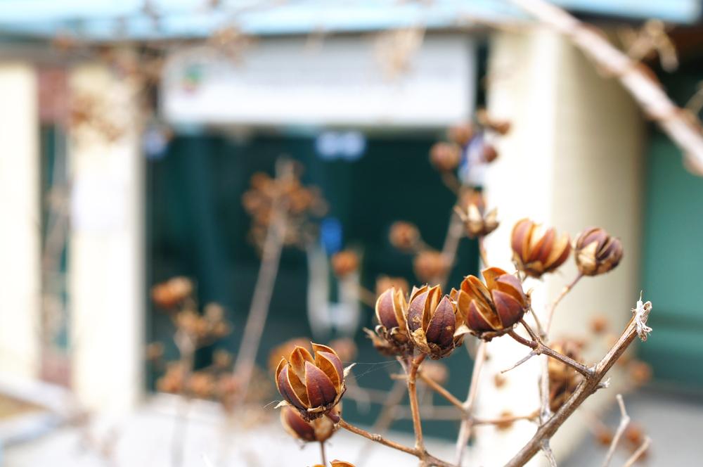 아직 봄은 오지 않았다.