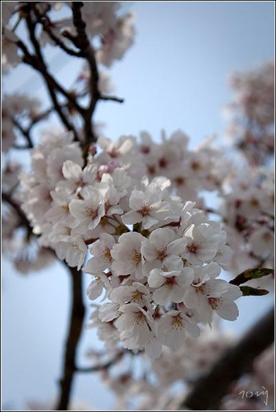 봄꽃여왕...
