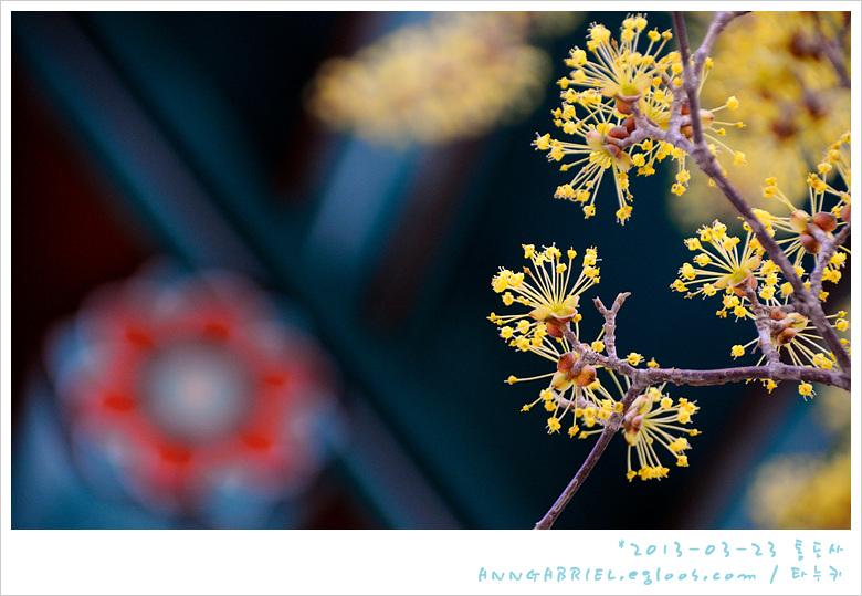 [통도사] 봄꽃 경내 - 2