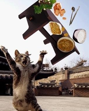 잉붕어의 재수 한번 끝내주게 없던 오사카 여행기. 제..