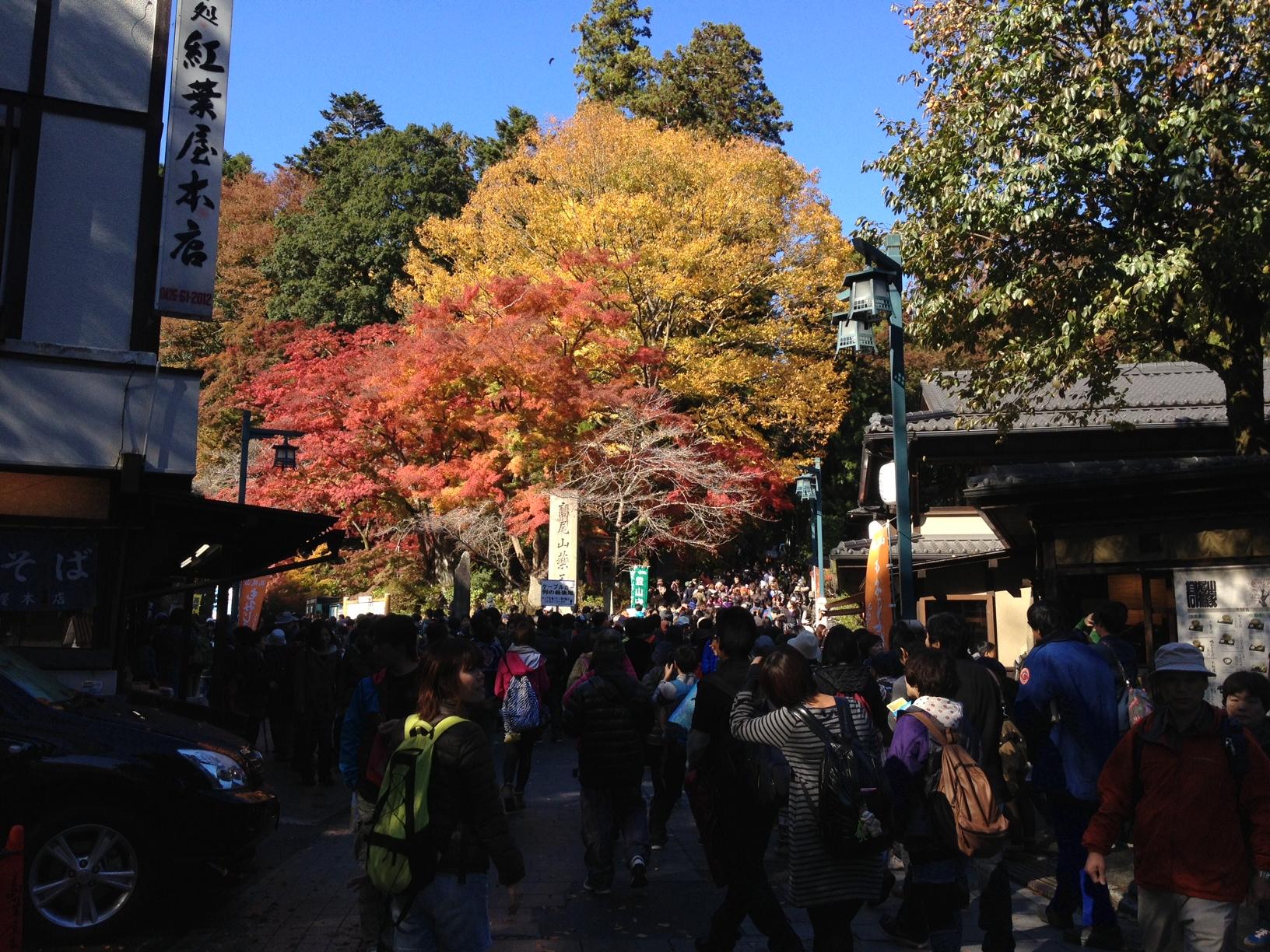 지난 가을의 타카오산 단풍놀이.