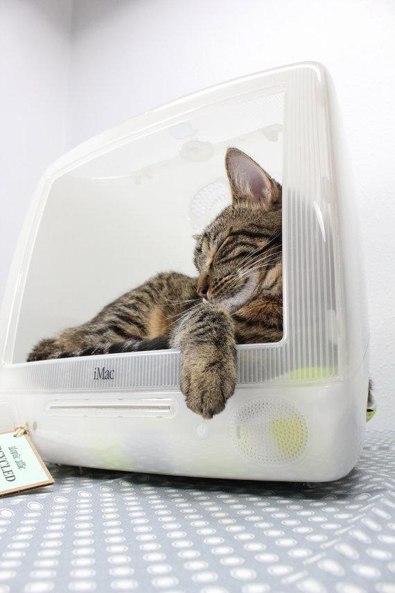 고양이를 위한 아이맥 컴퓨터