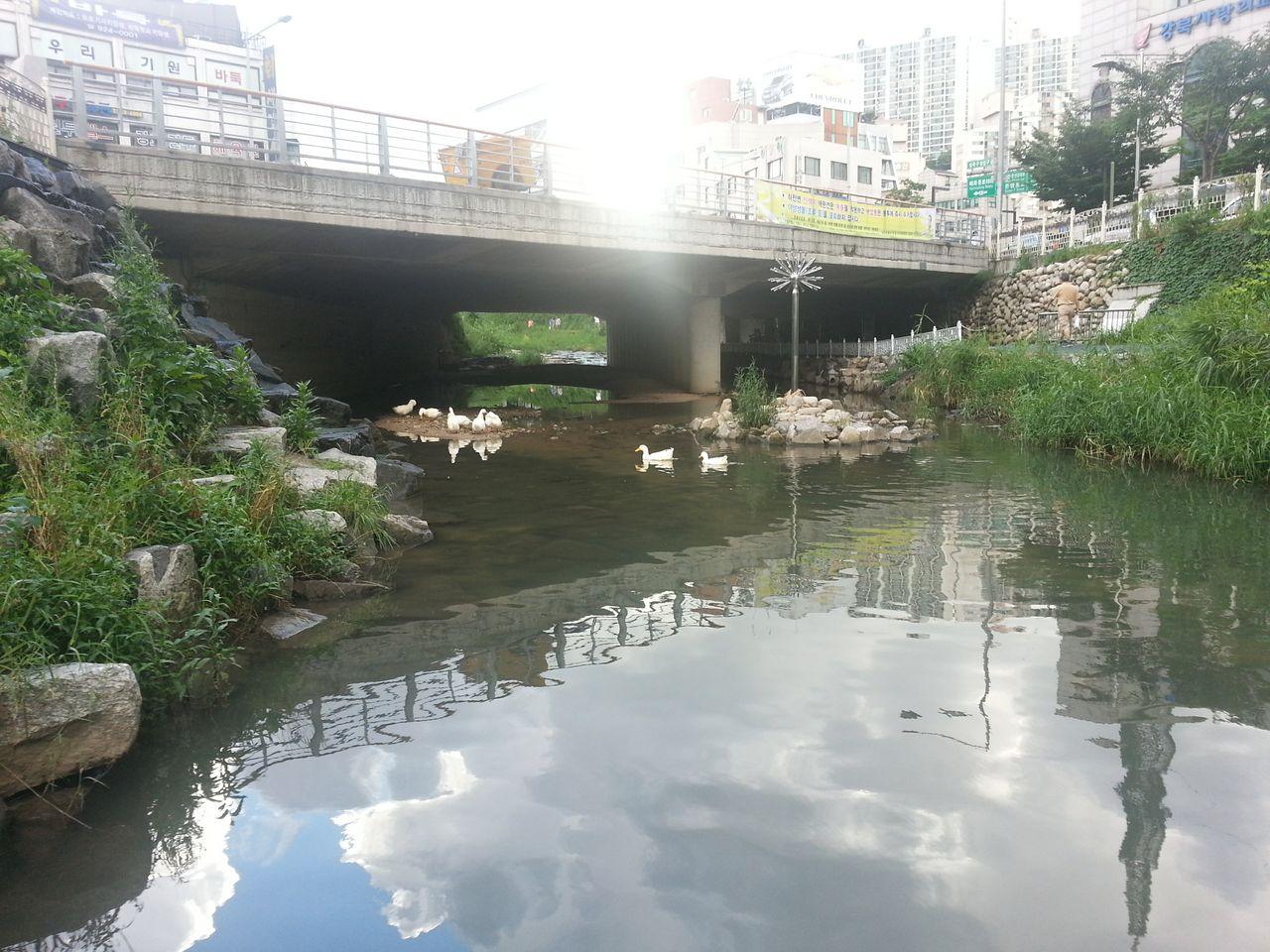 아름다운 백조는 물 밑에선 필사적으로 헤엄치고 ..