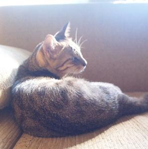 고양이와 드라이브