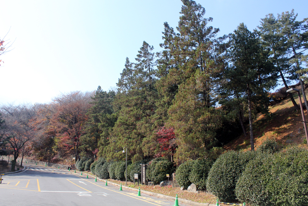 가을 사진 몇 장-