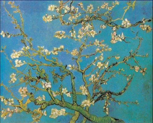꽃 피는 아몬드 나무(Almond Blossom) -Vin..