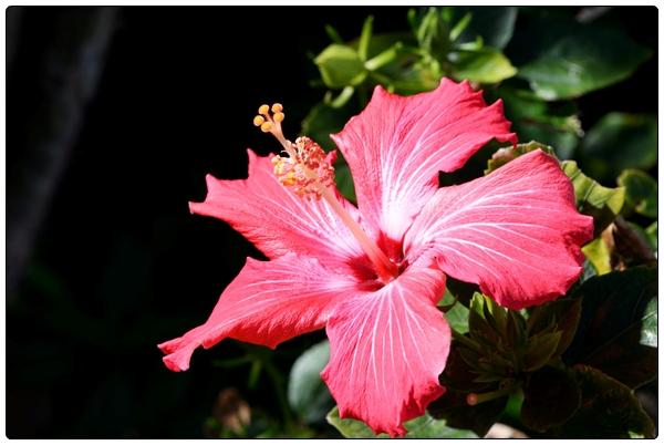 오키나와의 꽃들