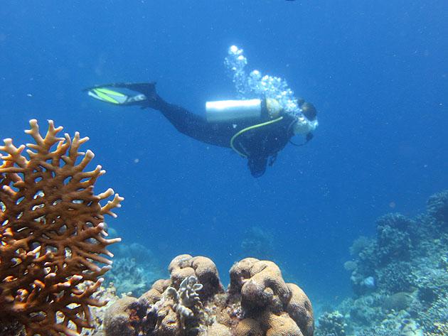 팬더 물고기, 지도 복어, 재미있게 생긴 바다생물..