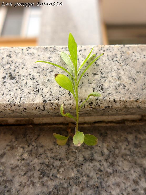 계단에 핀 잡초