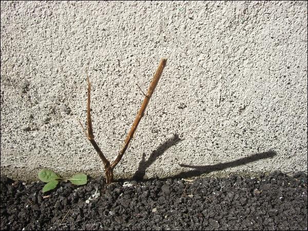 (2014.10.15) 골목 풍경, 감나무, 호박덩굴, 코..