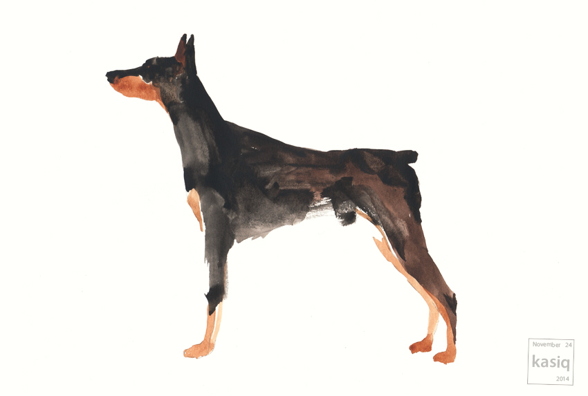 Dobermann_male