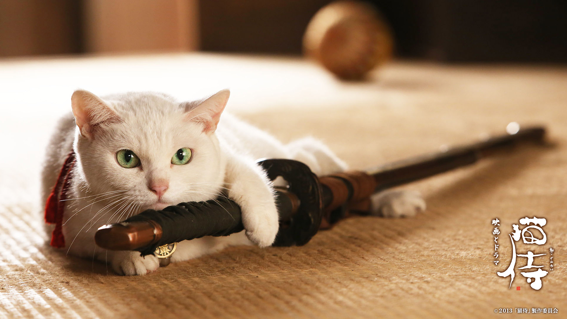 고양이 사무라이(猫侍)