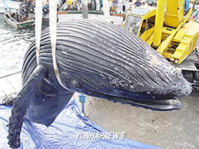 고래 뱃속에서 살아 나온 어부