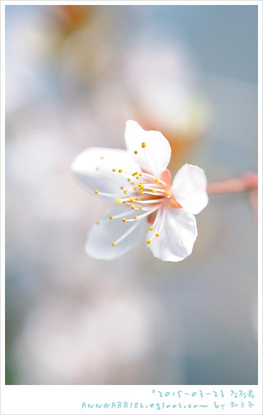 [집정원] 봄 기지개 피는 옥상