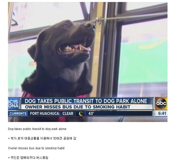 똑똑한 개