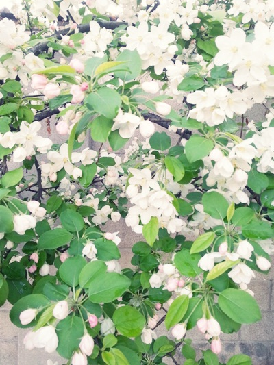 벌써 지나간 듯도 한 봄날의 꽃