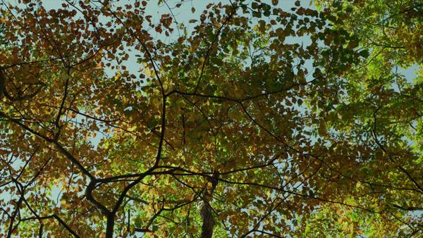 - 리틀 포레스트: 여름과 가을 (Little Forest: su..