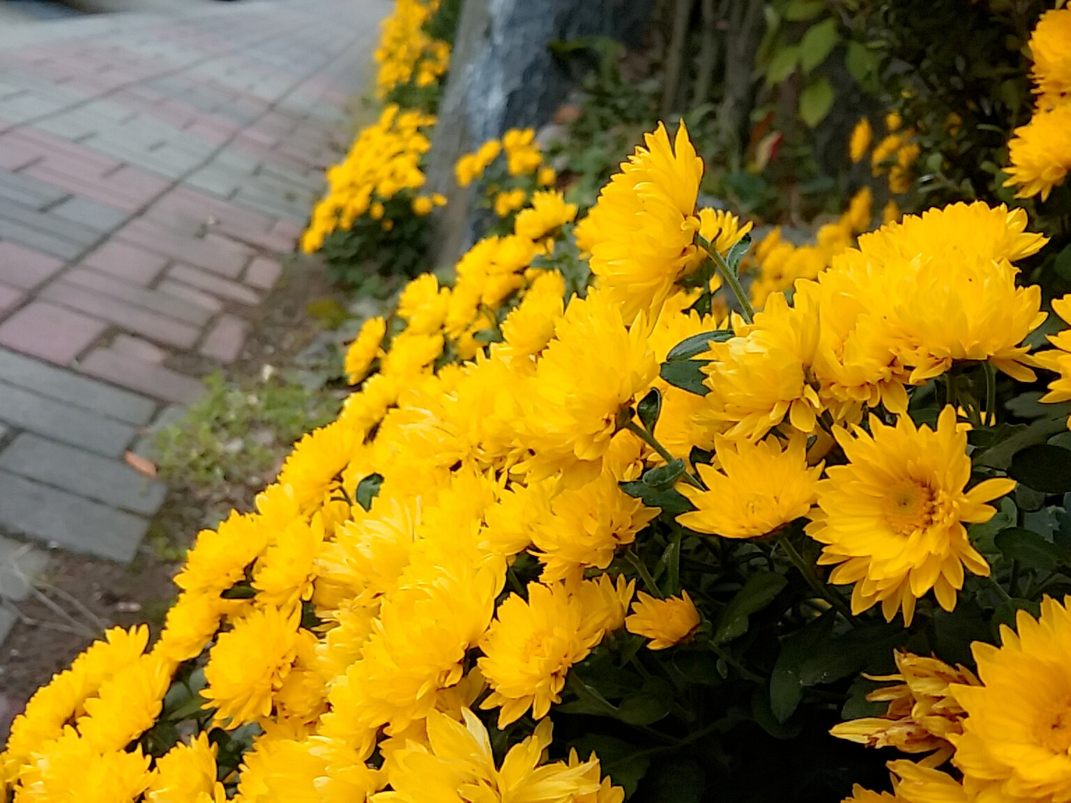 역시 가을엔 국화꽃이 짱!!!
