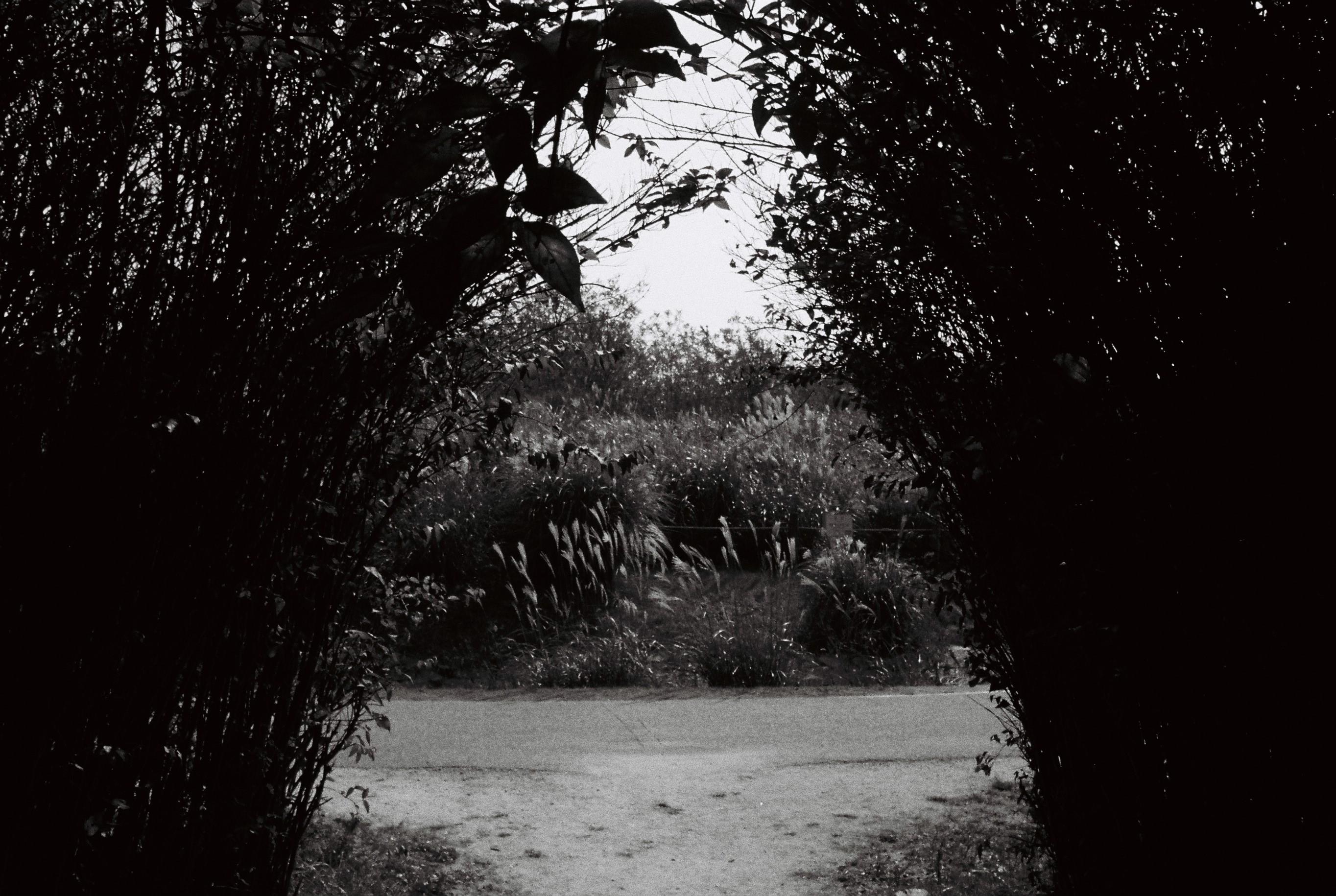 #7. 마른 풀잎 위에 촉촉한 발자국 (Nikon TW20, 4..