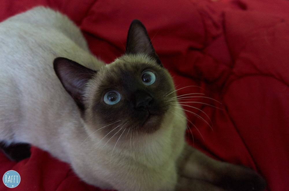 내게 너무 완벽한 고양이