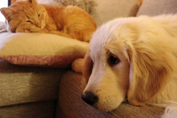 개와 고양이가 함께 있는 사진