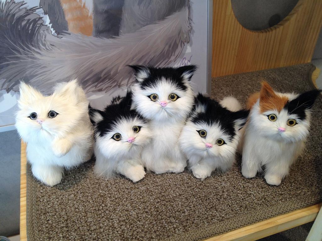 인사동 쌈지길의 '가또블랑코' 고양이전문 가구샵