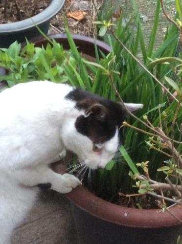 풀 뜯는 고양이