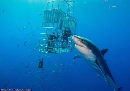 상어 몸통 길이가 5m