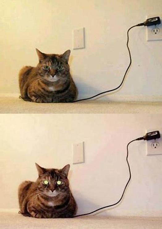고양이만 알고있는 4차원 세계