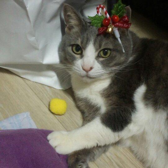 크리스마스 고양이