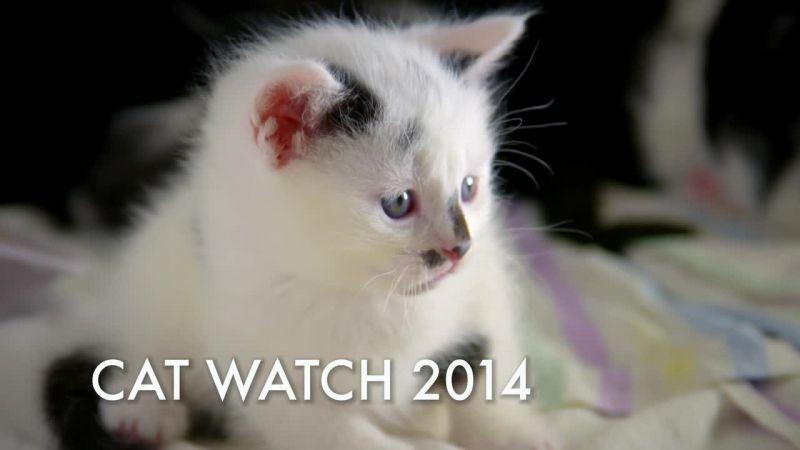 KBS 1TV 동물의 왕국에서 고양이의 관점에서 생..