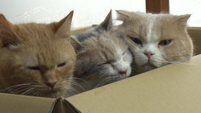 실사 영화 '네코아츠메' 관련 고양이 사진 100장 공개